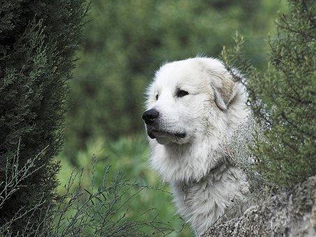 tresura psów warszawa